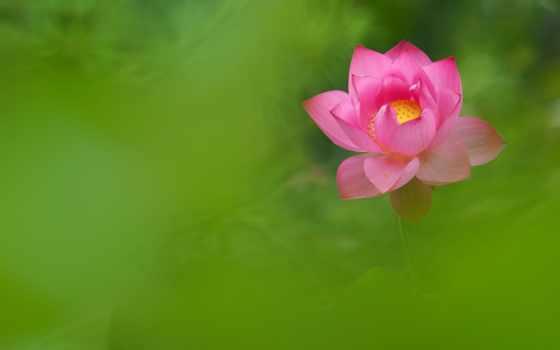 lotus, количество, desktop, фотографий, collector, goodfon, other, мб,
