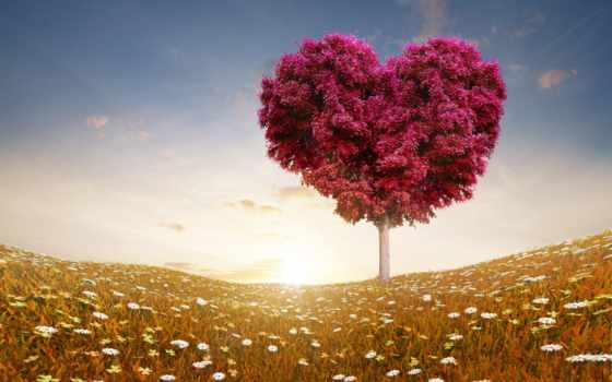 сердце, дерево, love, святого, день, valentine, небо,