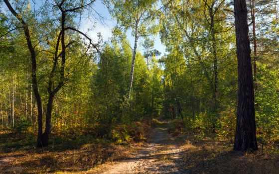 eos, canon, галанзовская, осень, лес, березы, голубое, небо, сентябрь,