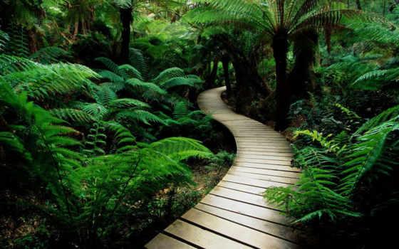 ecran, путь, дорога, forêt, fonds, тропинка, подборка, gratuits, природа,