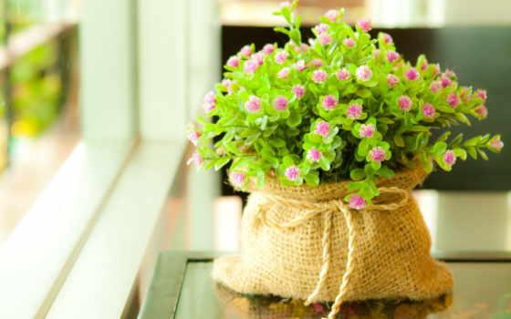 cvety, маленькие, зелёный, string, мешочек, цветочки, crustaceans, рождения, мешочке,