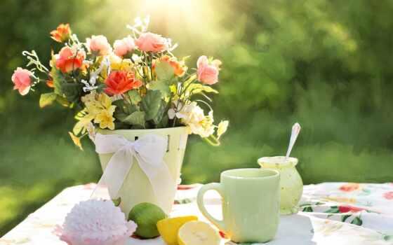 цветы, gullar, букет, вазон, роза, cup, meal, весна, sun, гуль