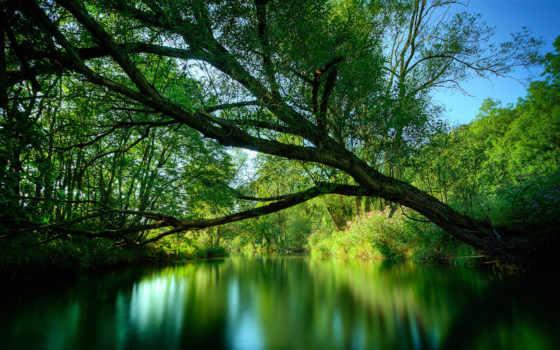 lake, green