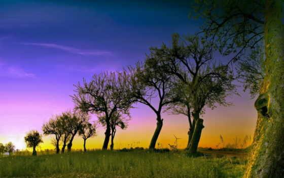 trees, ветви, странные