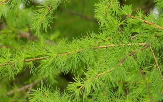 природа, макро, branch, разное, другой, sun, весна,