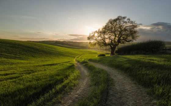 дорога, free, kartinik, природа, дерево, закат