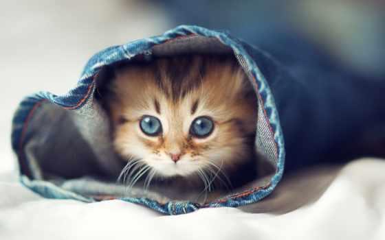 кот, котенок, cute, prank, funny, коллекция