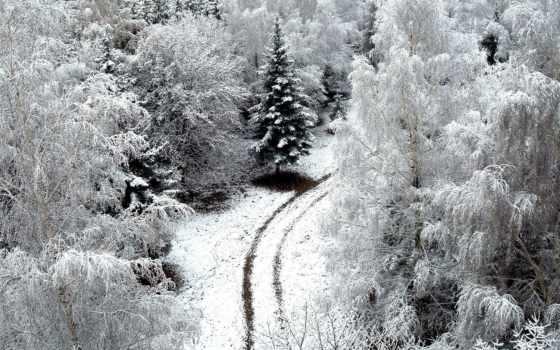 лес, коллекция, winter, user, смотреть, baum, oben