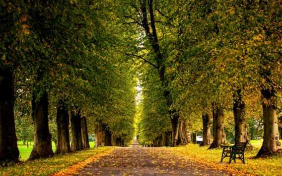 прогулка, листья, дорога