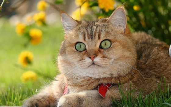 рыйжий кот