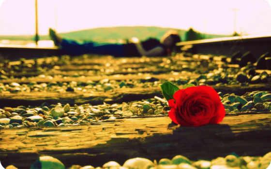 девушка, роза, настроения