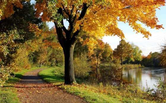 осень, дерево, park, природа, высоком, качестве,
