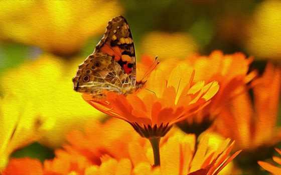 макро, garden, you, календарь, gardens, фрукты, summer,