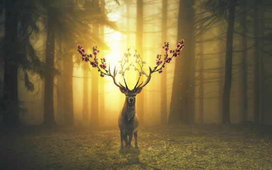 лань, лес, desktop