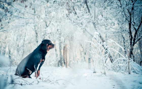 зимой, собака, лайков, дизлайков, собачки, tapety, чтоб,