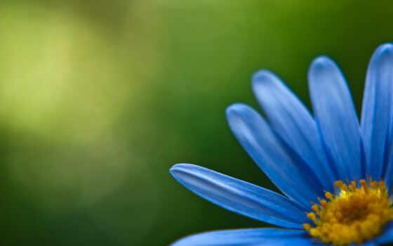 фоновые, графика, красивые, цветы, blue, рисунок, фон, лепесток, веток, yellow, зелёный, лепестки,
