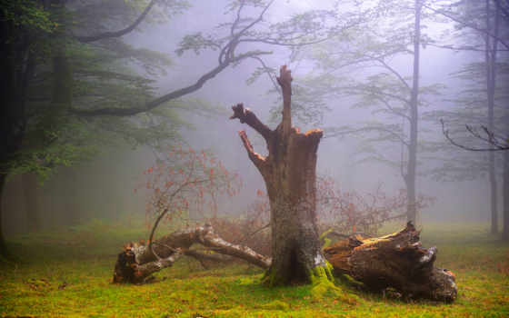 природа, туман, великобритания