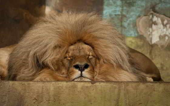 lion, тебя, that