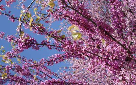 сиреневый, цветы, весна, голубое, небо,