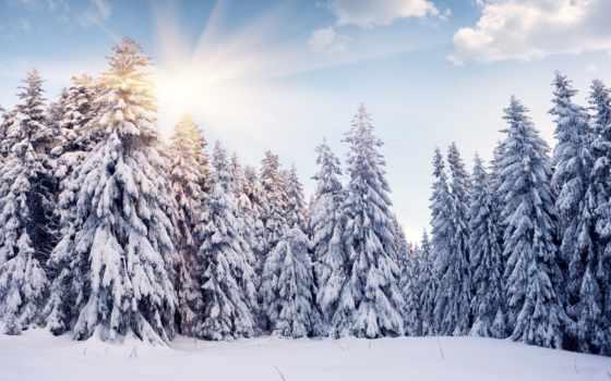 winter, природа, снег, елки, oblaka, sun, trees, лес, зимы,