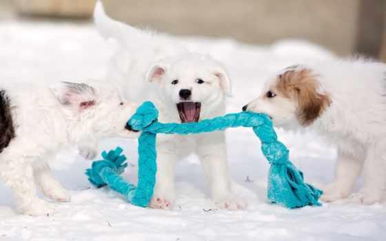 собака, снег, dogs