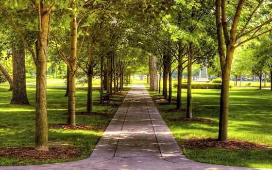 день, солнечный, аллея, парковая, красивые,