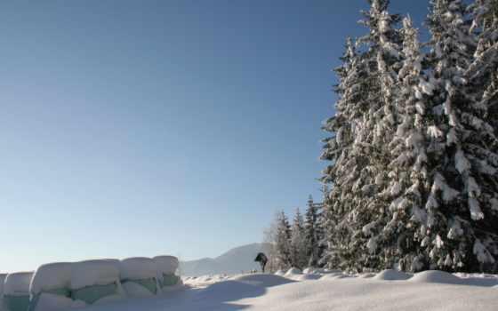 stock, winter, природа