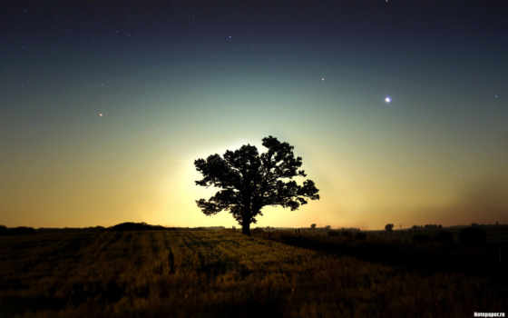 утро, дерево, звезды, fragma, toca, random, phaeleh, comics, you, ночь