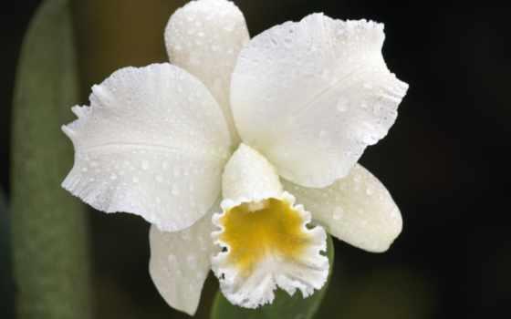 цветы, растения Фон № 2197 разрешение 1920x1080