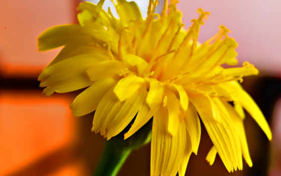 flowers, full