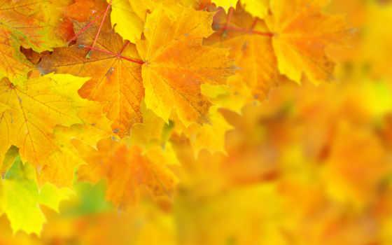 осенние, клипарт, листья