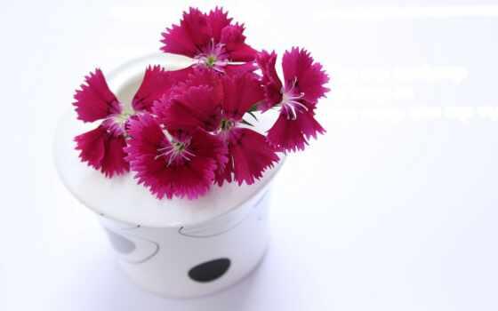цветы, fondos, flores