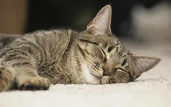 кошка, son, спит