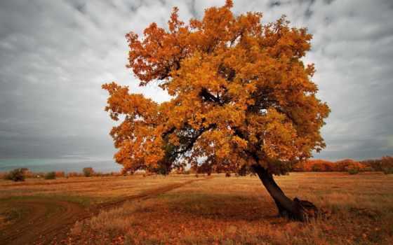 осень, дерево, природа