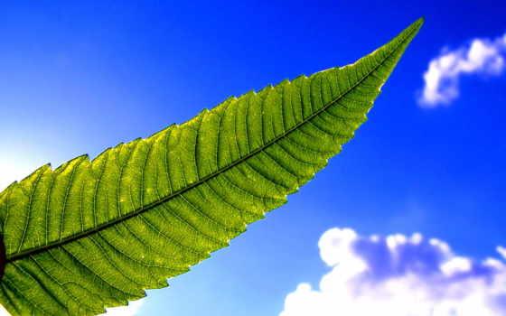 небо, blue, листва
