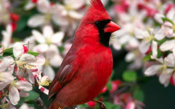 птицы, птица, zhivotnye