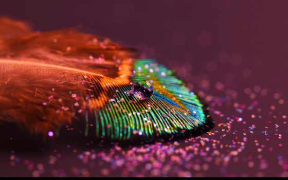 перо, цветное, drop, гладь, взгляд,