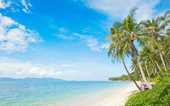 пляж, пальмы, images