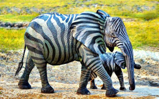 you, far, слон, animals, hybrid, zebra,