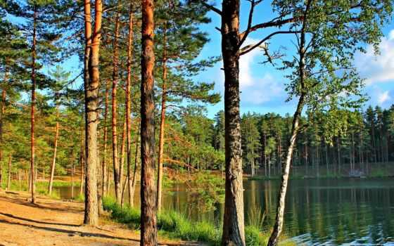 коллекция, pine, природа, озеро, растущий, лес, house, keep, осень, река, user