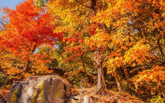 осень, листва, new, leaf, пасть, дерево