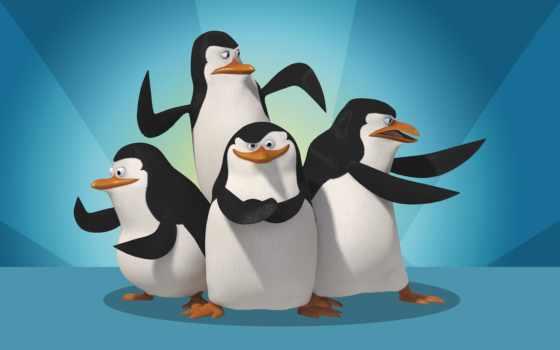 мадагаскара, пингвины, обои, cкачать, пингвин, quo