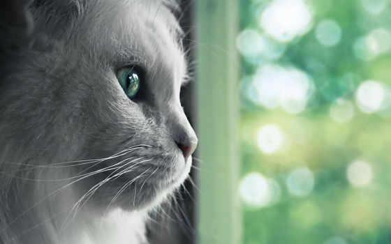 кошка, пушистая