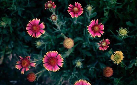 яркие, цветами, фотографии