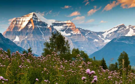 горы, цветы, summer