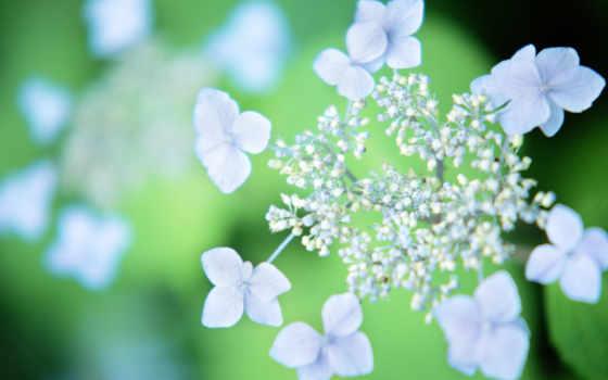 flowers, цветы, color
