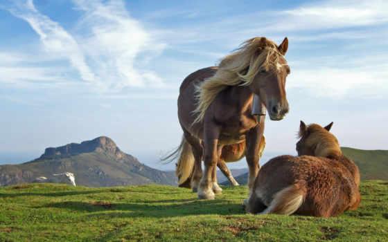 кони, zhivotnye, лошади