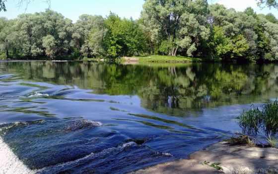 тихая, заводь, река, trees, которой, картинка,