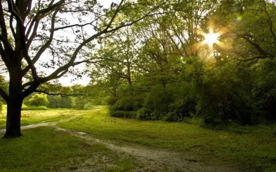 summer, sun, природа, park, зелёный, вечер, аллея,