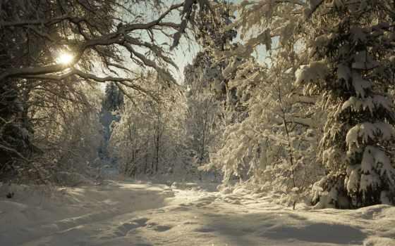 жизни, явления, растений, зайцы, красивые, степные, тропинке, зимней,